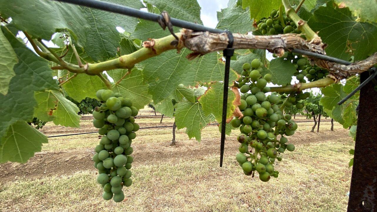 Best Hunter Valley wineries to visit